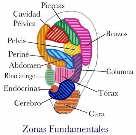 Zonas de auriculoterapia