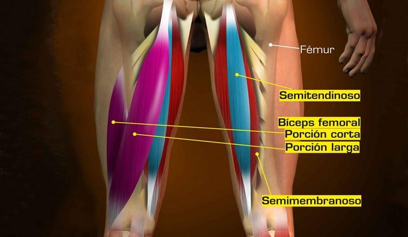 ejercicios para los biceps femorales