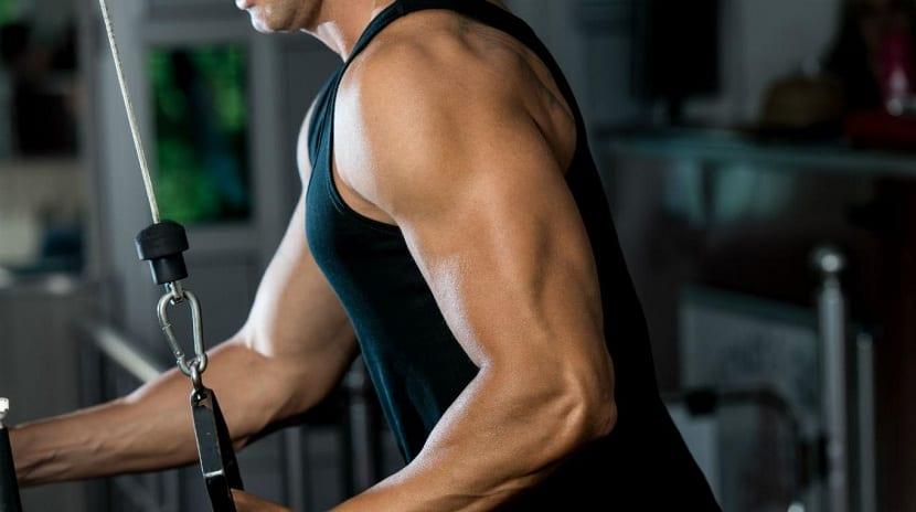 ejercicio para triceps