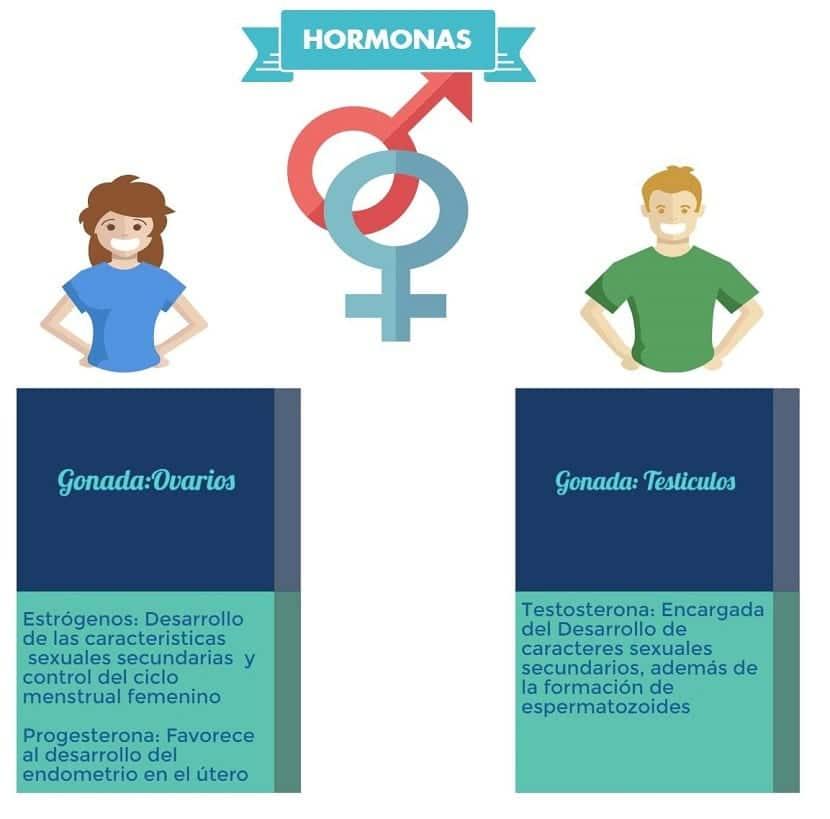 Diferencias de hormonas entre hombres y mujeres