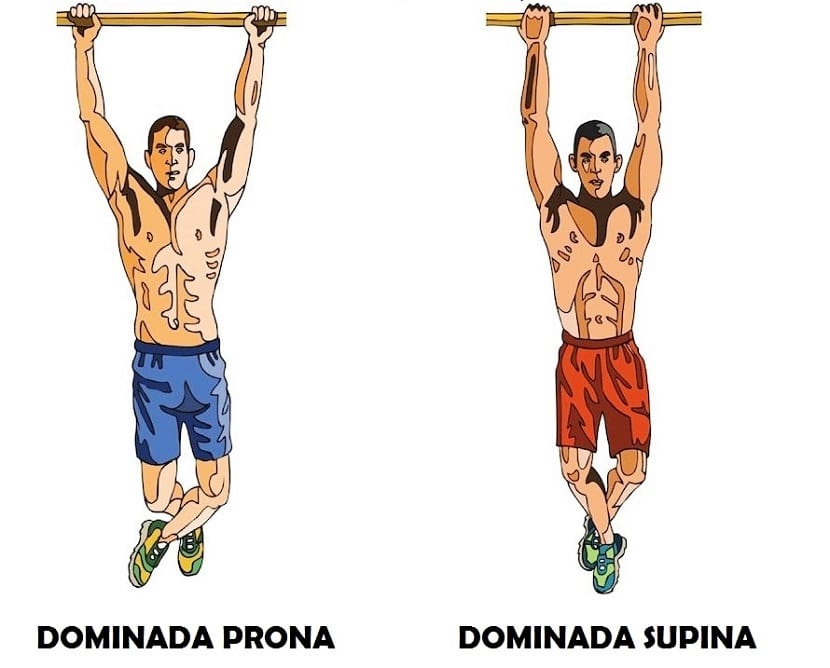 Dominadas supinas y dominadas prona