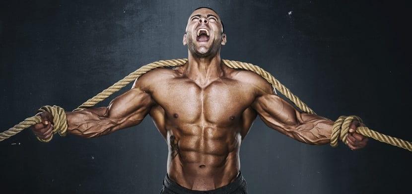 fuerza y masa muscular