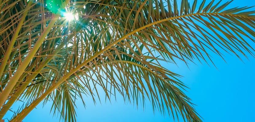 Palmera recortando cielo azul