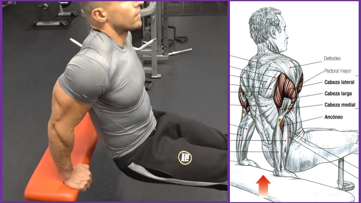 fondo de triceps